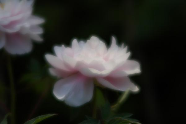 botan_7290.jpg