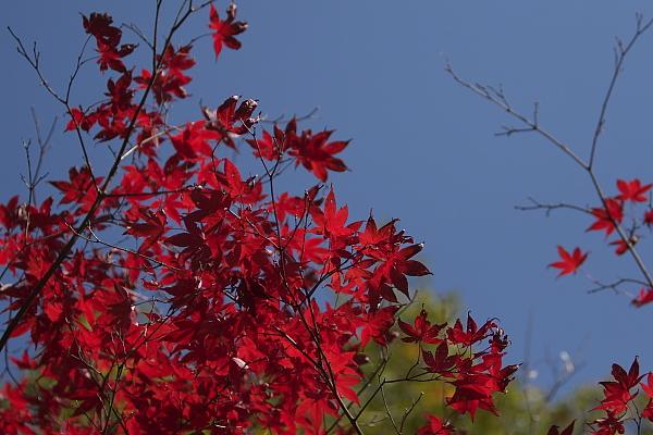 fuki_3921.jpg