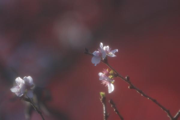 fuyu1_4652.jpg