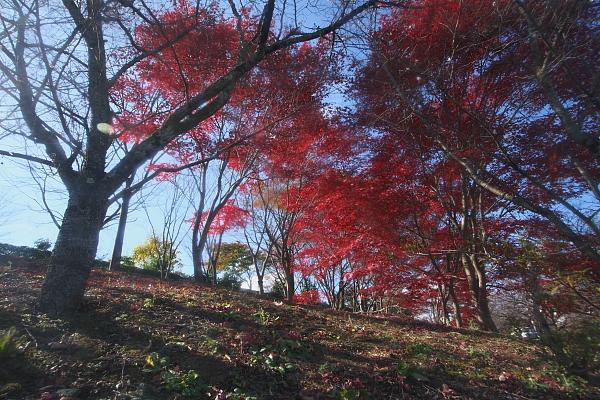 fuyu2_4647.jpg