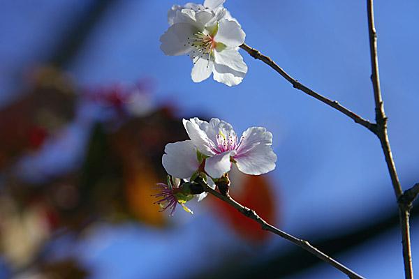 fuyu_1333.jpg