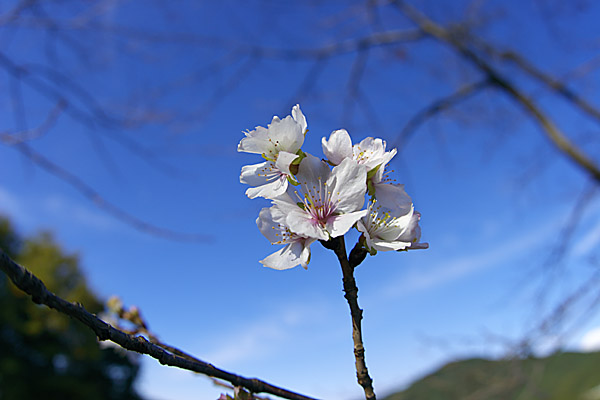 fuyu_1348.jpg