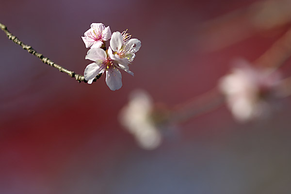 fuyu_1382.jpg
