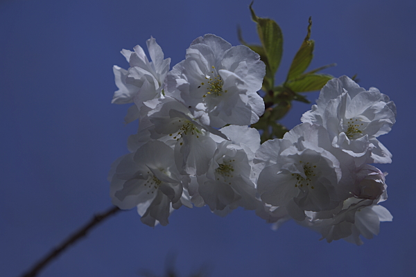haru_1358.jpg