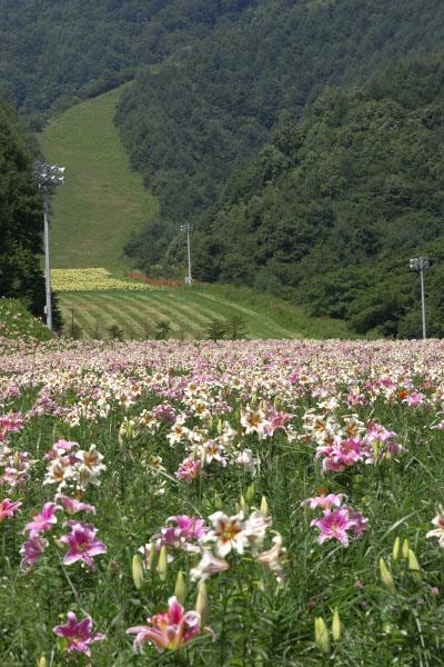 iwakura_9735.jpg