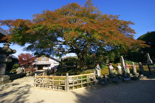 koyo_1643.jpg