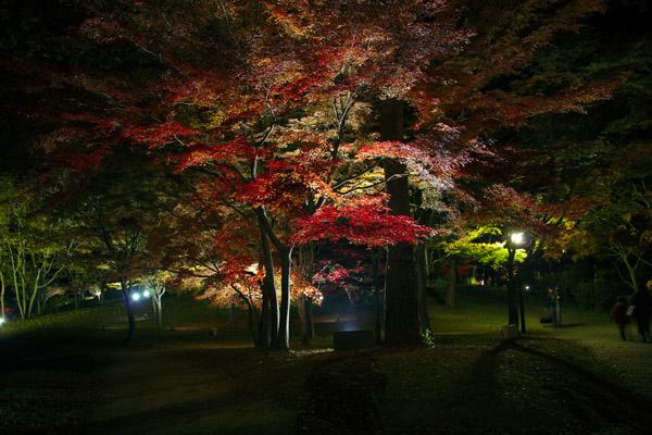 koyo_1893.jpg