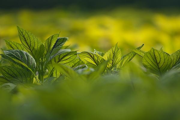 leaf_1421.jpg