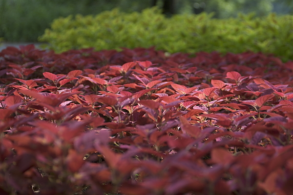 leaf_1425.jpg