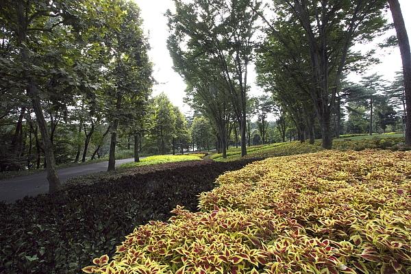 leaf_1432.jpg
