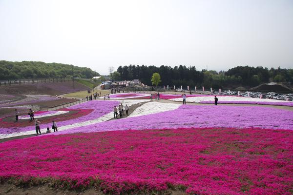 minoh_shiba4.jpg