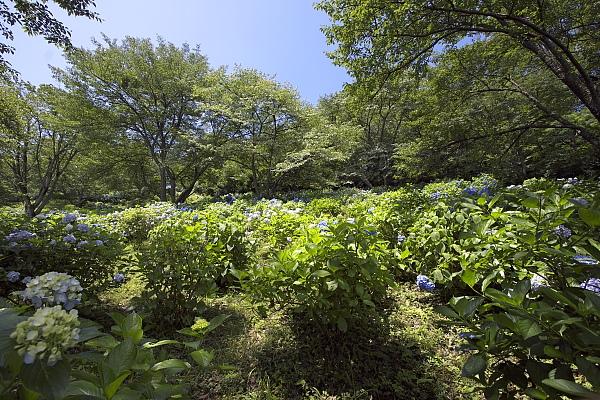 minoyama1_8038.jpg