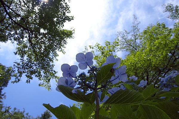 minoyama2_8009.jpg