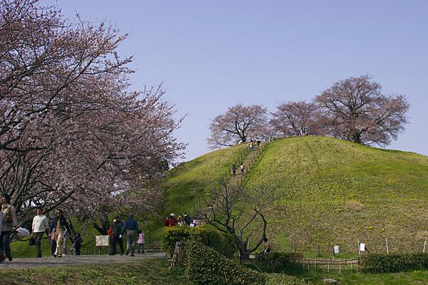 sakura_5258.jpg
