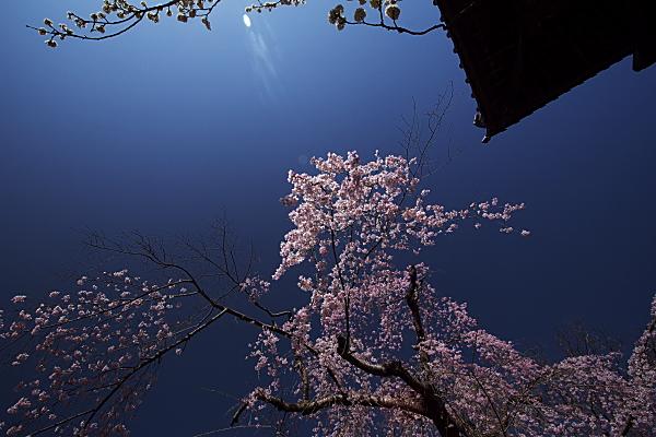 shidare1_0498.jpg
