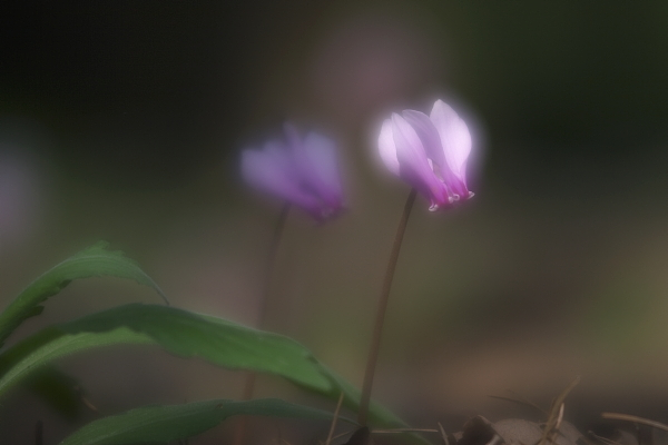 shikuramen_1715.jpg