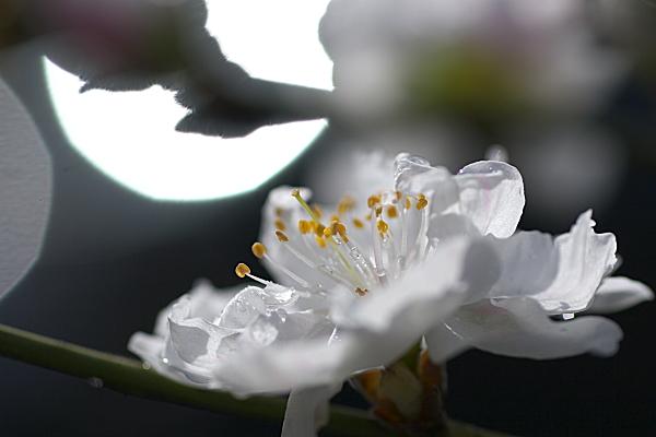 shizuku_0903.jpg