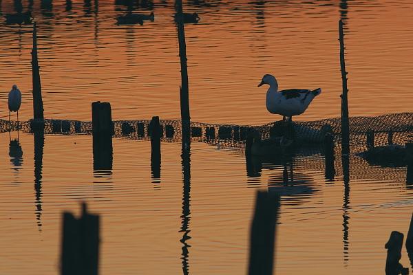 sunset_5280.jpg