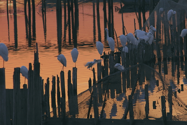 sunset_5282.jpg