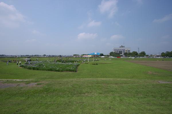 syobu_8553.jpg