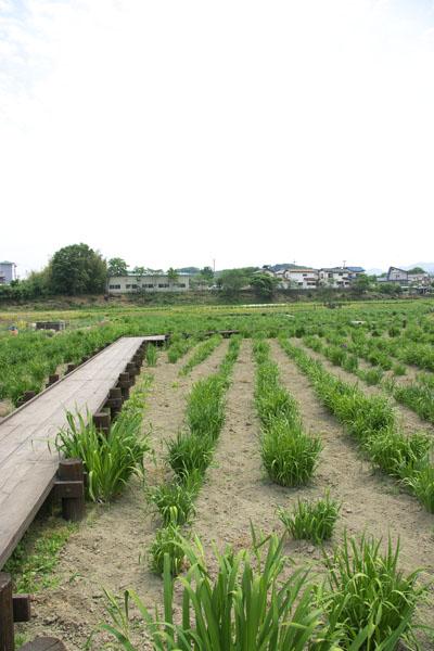 tamagawa_8231.jpg