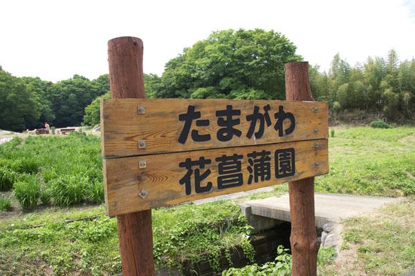 tamagawa_8232.jpg