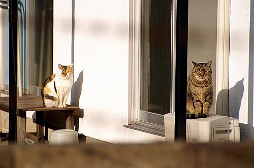 同じ向きの猫