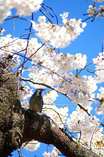 20060422_sendai_鳥