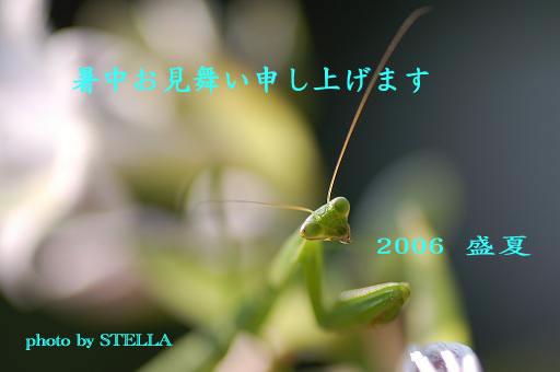 2006 カマキリ