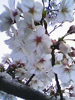 060329_1735~01.jpg