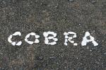 cobra2.jpg
