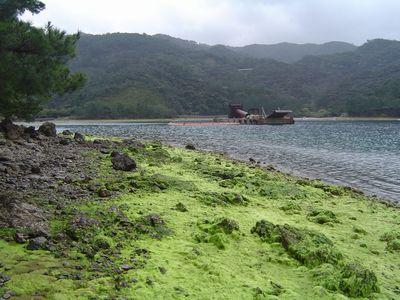奄美の藻景色