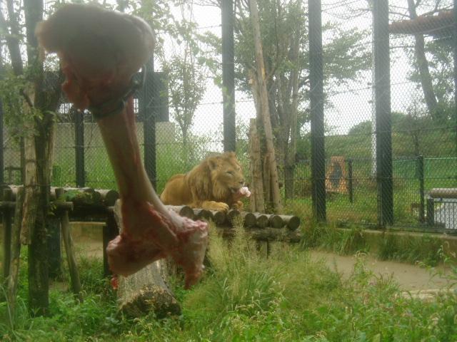 大森山の獅子