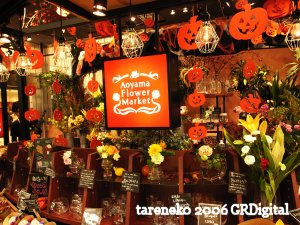 20061029-1blog.jpg
