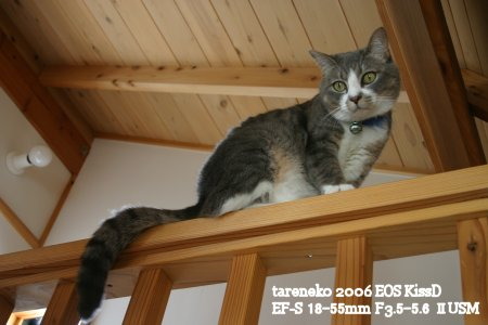 20061031-5blog.jpg