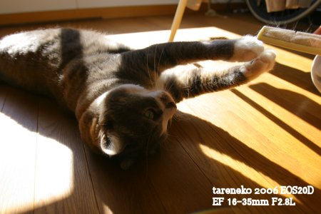 20061113r-4blog.jpg