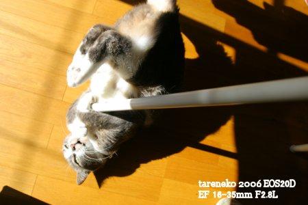 20061113r-7blog.jpg