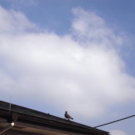 20070518-4.jpg
