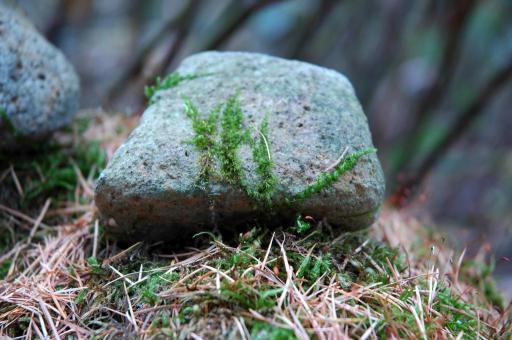 石ころに苔