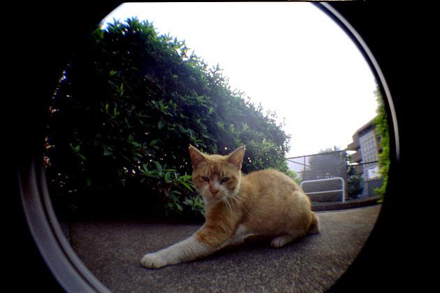 050625cats01.jpg
