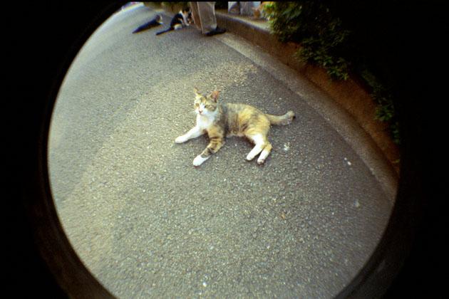050625cats02.jpg