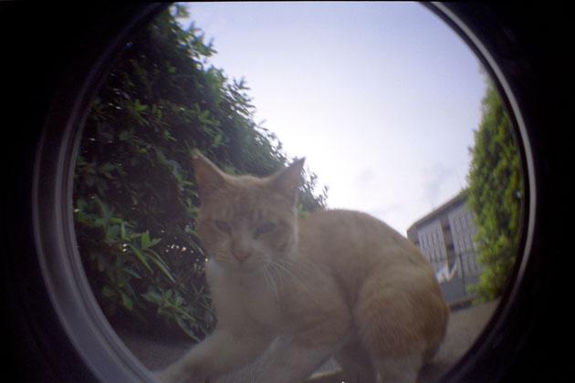050625cats03.jpg