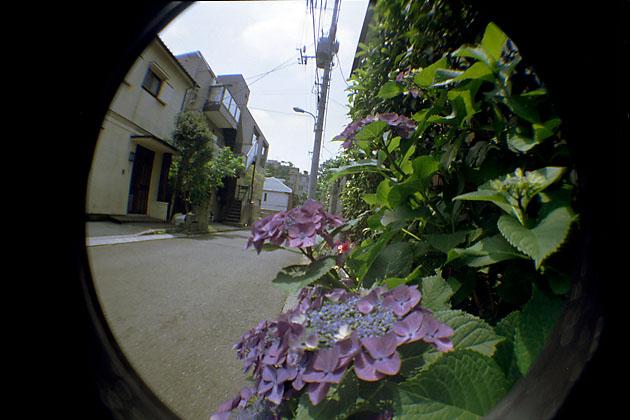 0506aji02.jpg