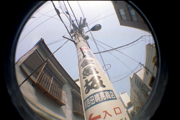 050807kingyo01.jpg