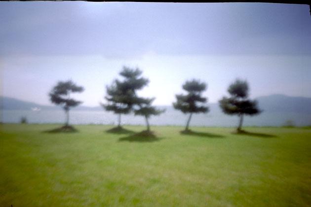 zebra04biwa.jpg