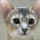 profile_mikan.jpg