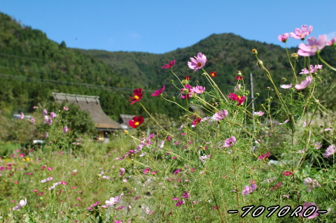 06miyama-aki010.jpg