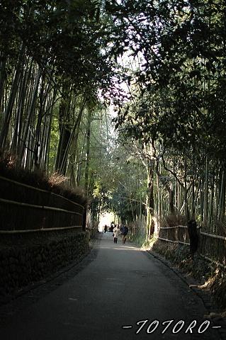 07arasiyama013.jpg