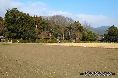 07arasiyama018.jpg
