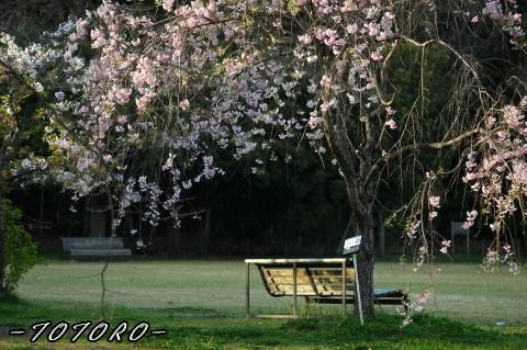 07bannpaku006.jpg